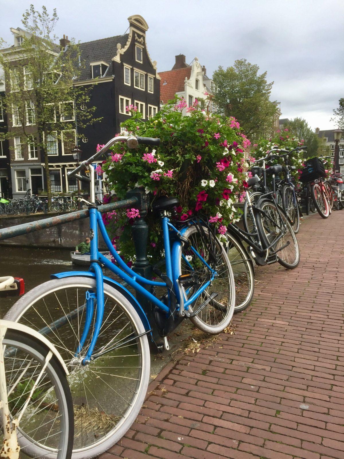 Freedom- The Amsterdam Paradox